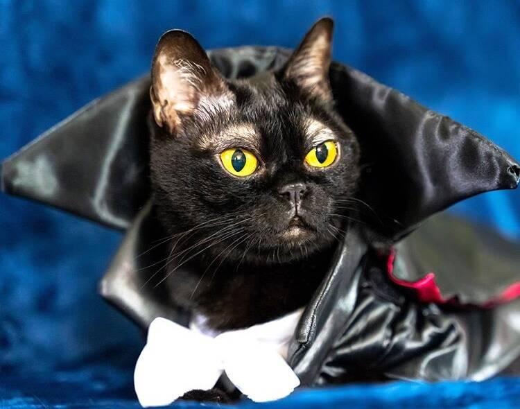 Conheça o gato de sobrancelhas estilosas que conquistou os internautas