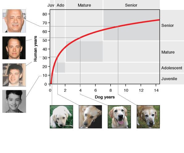 Seu cão pode ser muito mais velho do que você imagina