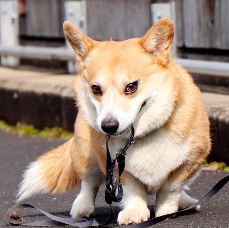 Conheça Gen, o cão que tem mais expressões faciais que muito ator por aí