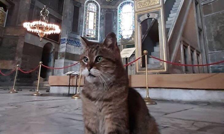 Conheça a gata que vive na Basílica de Santa Sofia, em Istambul