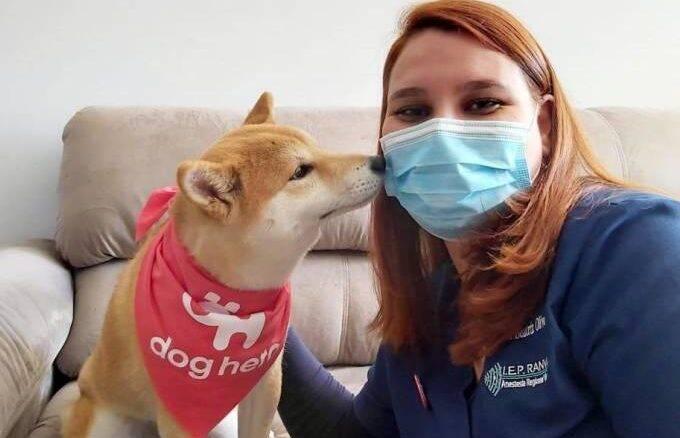 Coronavírus: empresa lança serviço de veterinário em domicílio
