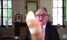 Gato interrompe videoconferência de político escocês