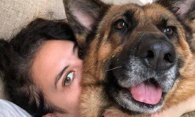 Assustada com a explosão em Beirute, cachorra se atira do 6º andar