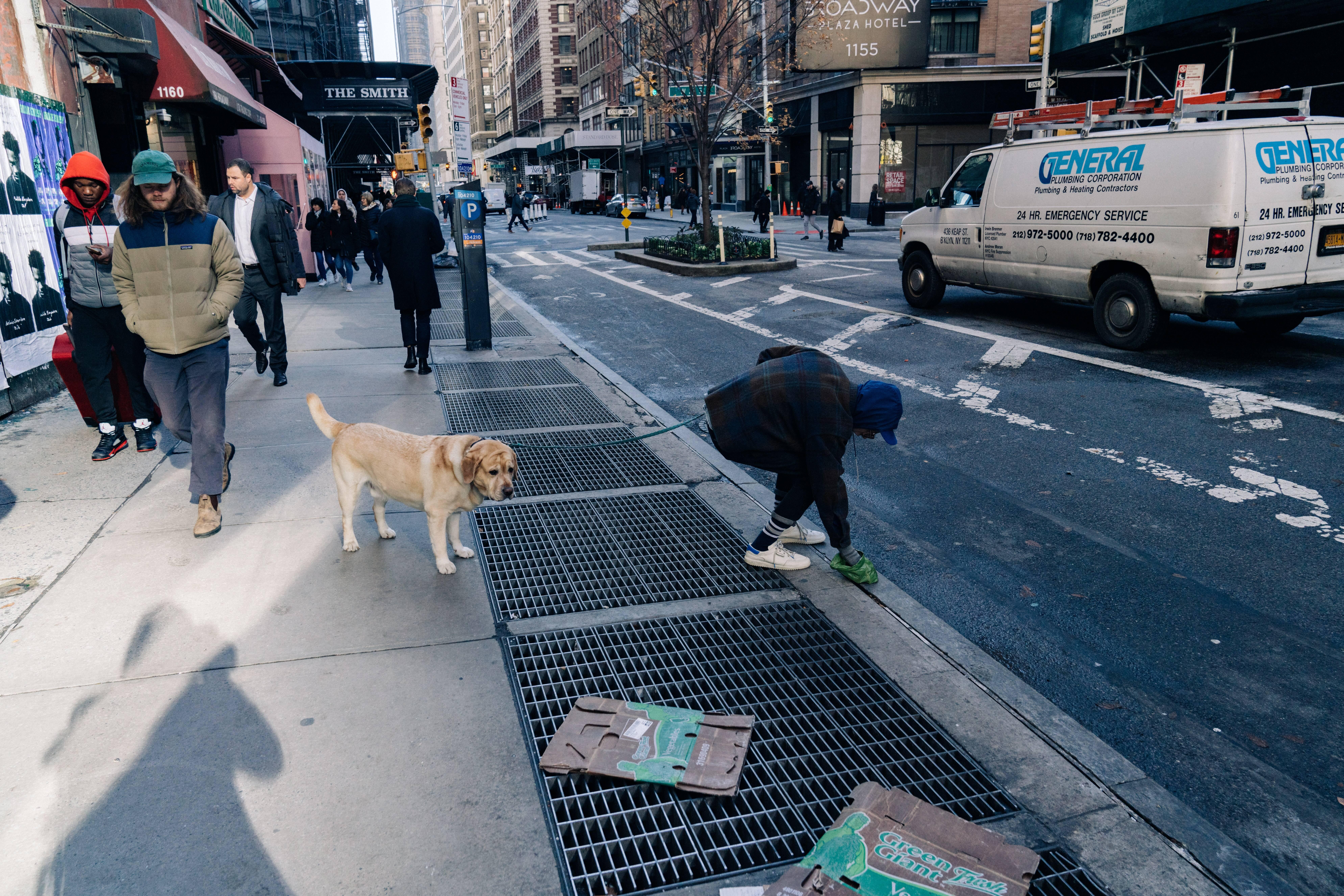 Por que seu cão anda em círculo antes de fazer cocô? A ciência responde
