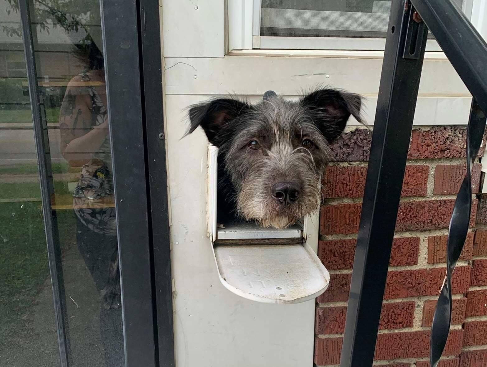 Cão usa caixa de correio para cumprimentar a vizinhança