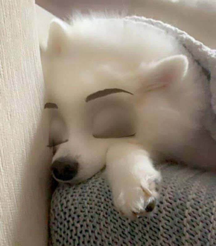 Cachorro com filtro