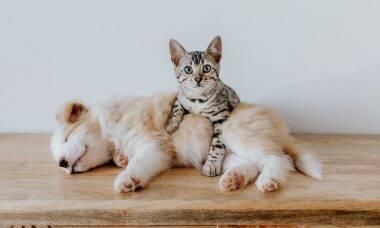 Cães ou gatos deixam as pessoas mais felizes? A ciência responde