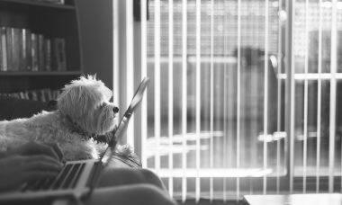 Vídeos: com esses pets, trabalhar em casa é impossível