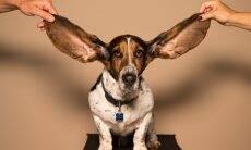 É preciso prevenir otite em cães e gatos mesmo no inverno, alerta veterinário