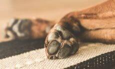 Álcool gel para limpeza de patas pode envenenar seu cão