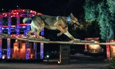 Canal de televisão estreia 'Olimpíada' com os melhores cães policiais