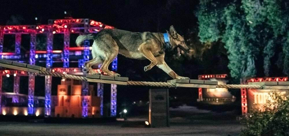 Canal de televisão estreia Olimpíada com os melhores cães policiais