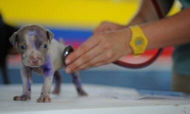 Pets: veterinária dá dicas para prevenir doenças e combater obesidade durante a pandemia