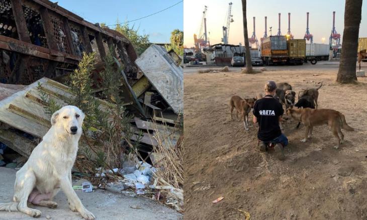 Voluntários resgatam centenas de pets desabrigados em Beirute