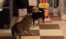 Vídeo: essa dança sincronizada de cães vai alegrar o seu dia