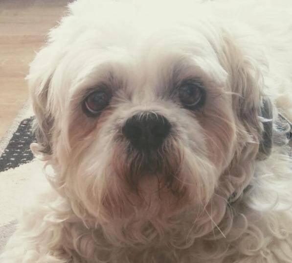 Cão entra na Justiça com pedido de indenização contra pet shop