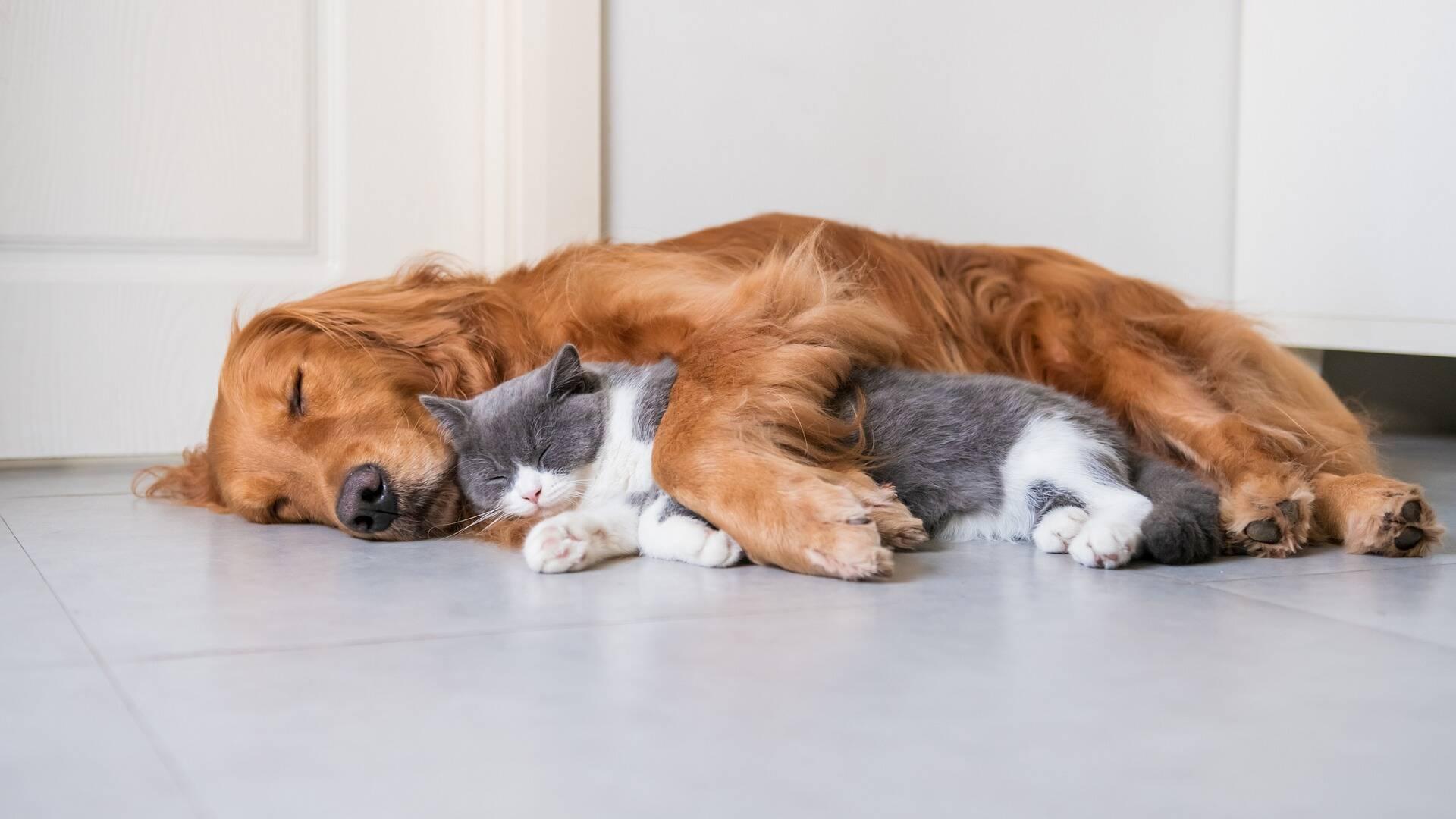 Cientistas descobrem feromônios que facilitam a amizade entre cães e gatos