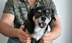 Seu cão tem medo do aspirador de pó? Saiba como ajudá-lo em 3 passos