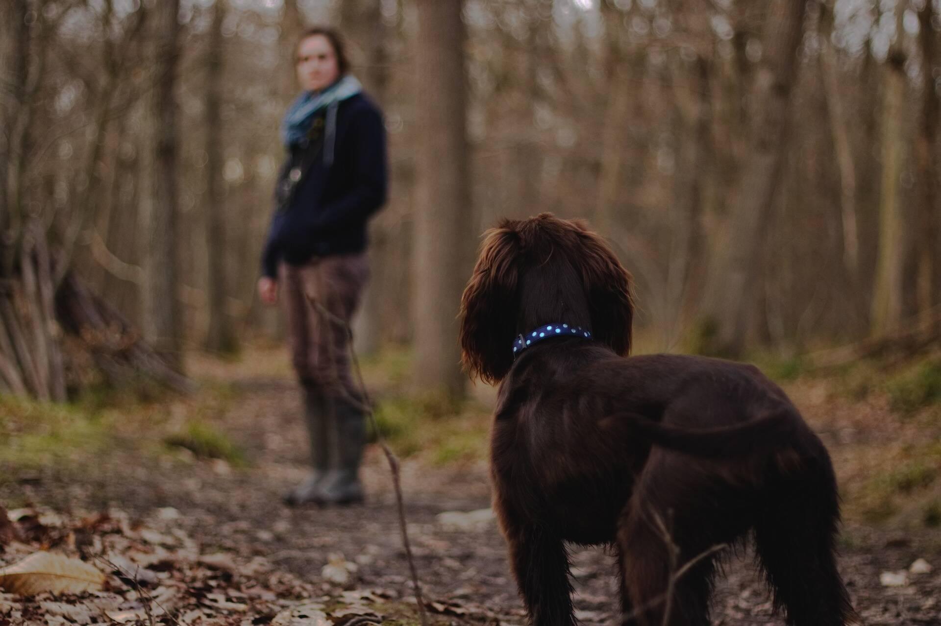 Na Alemanha, lei vai obrigar donos a passear com seus cães duas vezes por dia