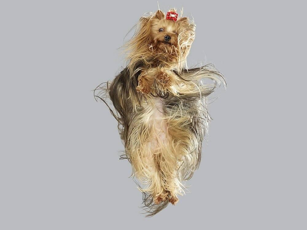 Essas 10 fotos de cães desafiando a gravidade vão alegrar o seu dia