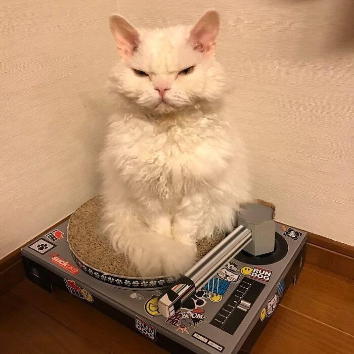 Conheça Chirico, a gatinha que parece julgar humanos o tempo todo