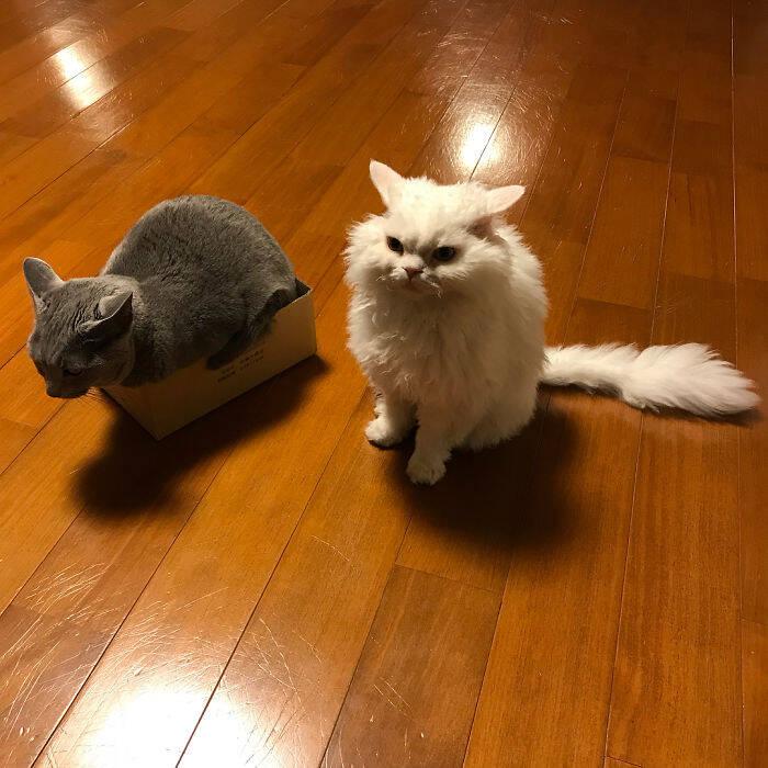 Chirico, a gatinha
