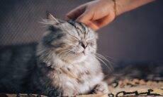 Você está acariciando seu gato de um jeito errado, diz a ciência