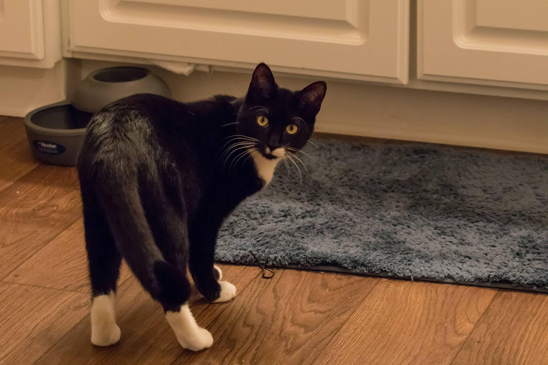 Acabou de adotar um gato? Saiba que cuidados tomar