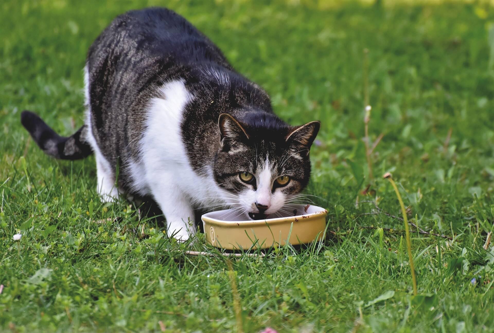 9 comidas que você tem em casa e colocam em risco a saúde do seu pet