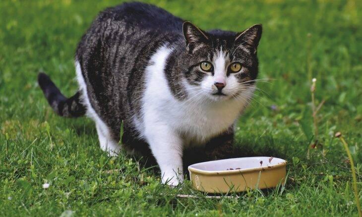 11 coisas que todo dono de gato deve saber, segundo os veterinários