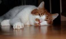 Seu gato está entediado? Confira dicas fáceis e baratas para entretê-lo