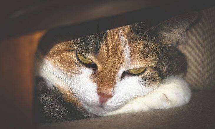 Se seu gato apresentar um desses 10 comportamentos, corra para o veterinário