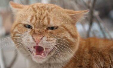 Decifre as expressões e a linguagem corporal do seu gato