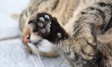 3 dicas para ajudar você a lidar com o luto pela perda de seu gato