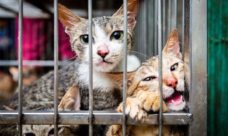 Grupo de bem-estar animal revela mercado de carne de gato no Vietnã