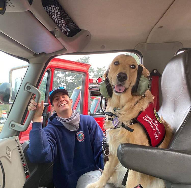 Cadela Golden retriever leva conforto a bombeiros que combatem incêndios florestais nos EUA