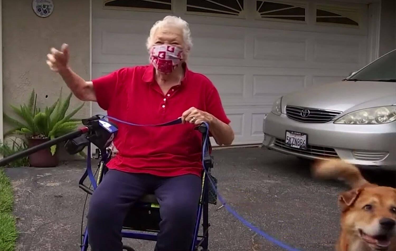 Cão herói busca ajuda e salva sua dona de 88 anos