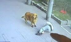 Vídeo: homem que passeava com cão desmaia após gato cair sobre sua cabeça