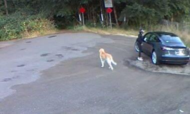 Vídeo: labrador abandonado abana o rabo enquanto carro de luxo vai embora