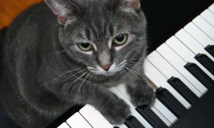 Vídeo: conheça Nora, a gatinha que toca piano