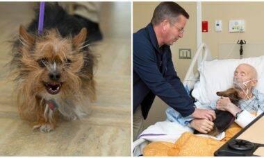 Veterano no leito de morte realiza seu último desejo: ver seu amado cão