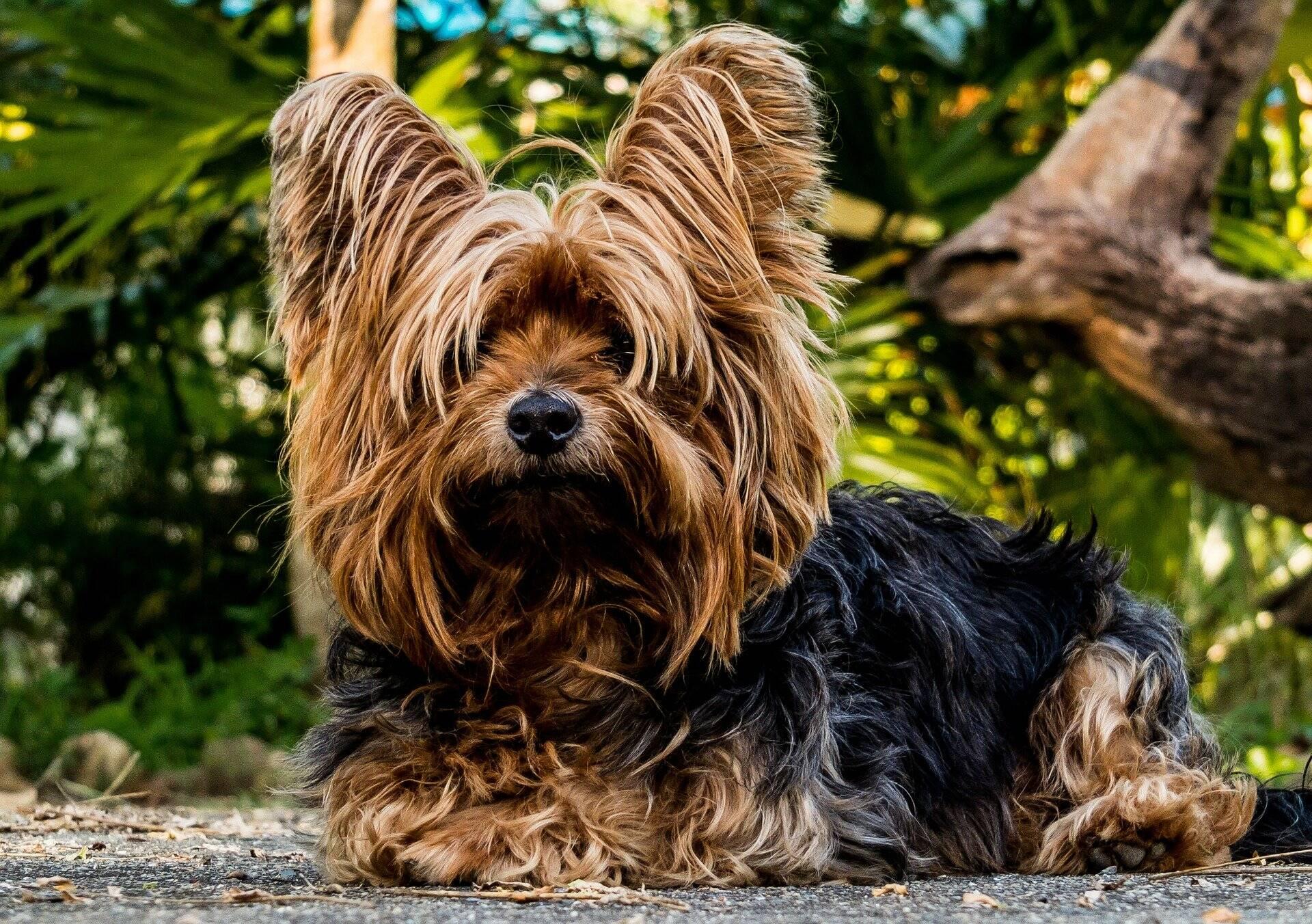 Cães: confira as 10 raças que se 'comunicam' melhor