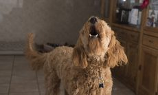 Cidade de Santa Catarina aprova projeto de lei que proíbe cães de latirem