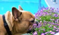 Primavera: conheça as plantas tóxicas que colocam em risco a vida dos cães