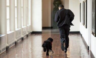 Entenda por que seu cão segue você até no banheiro