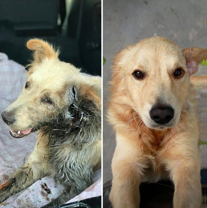 Segunda chance: 10 fotos com o antes e o depois de cães abandonados