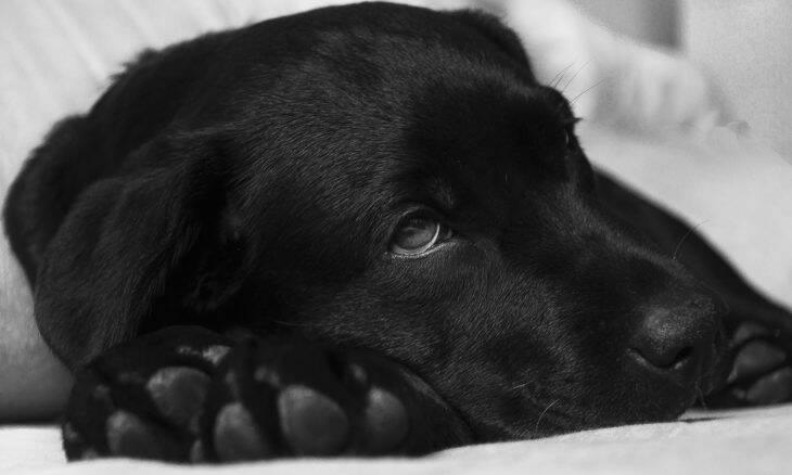 10 sinais de que o seu cão pode estar com câncer