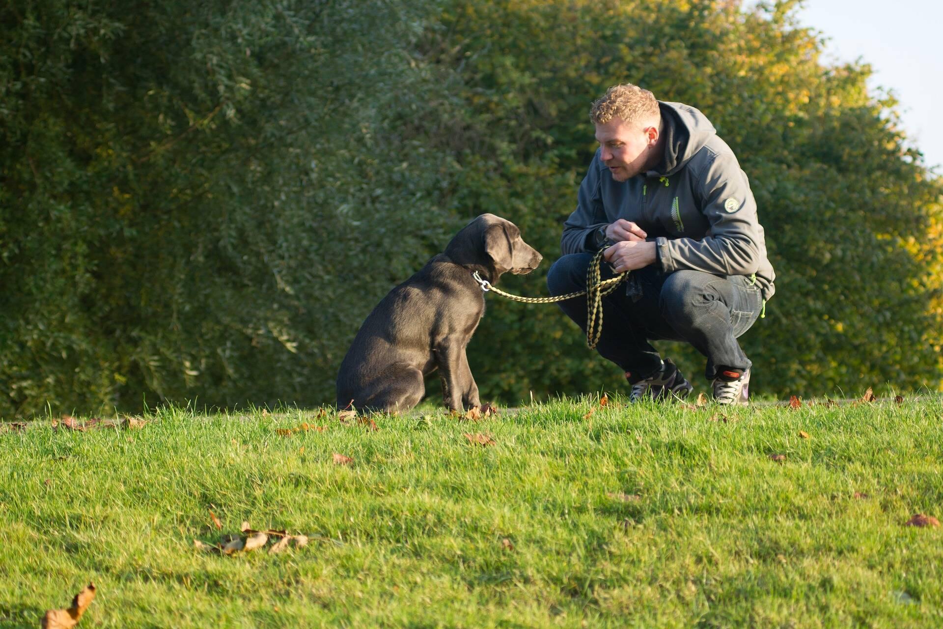 Seu cão não dá ouvido para o que você diz? Saiba como dar um jeito nisso