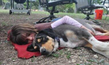 Donos fazem vídeos perturbando seus pets e causam revolta na internet