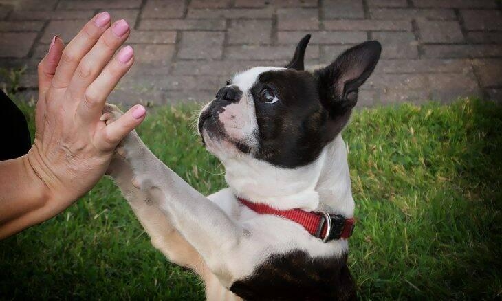 Saiba o que seu cão quer dizer quando coloca a pata em você